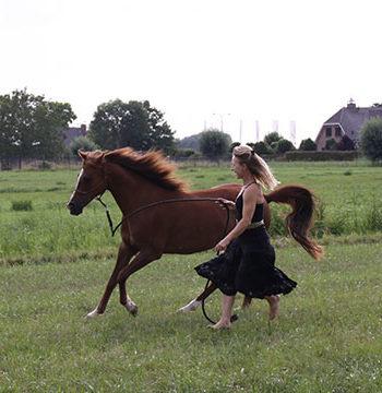 pure-paardenvoeding-annelies-referentie